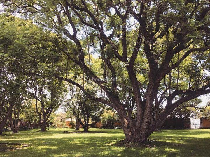 Jardín jacarandas