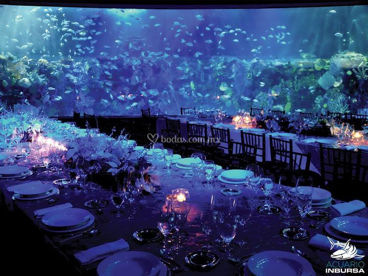 Acuario inbursa for Decoracion y ambientacion de eventos
