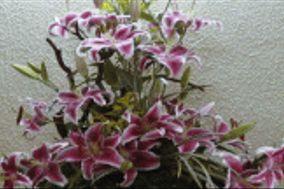 Florería Dina