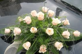Sorella Floral