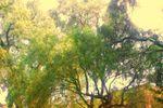 Hermos jard�n con areas verdes y terraza techada de Jard�n Real de San Mateo