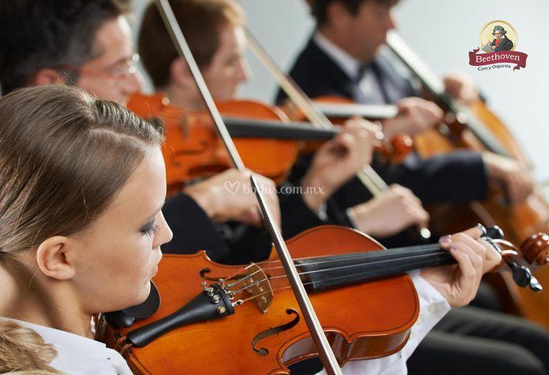 Violines para boda