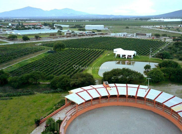 Viñedos azteca