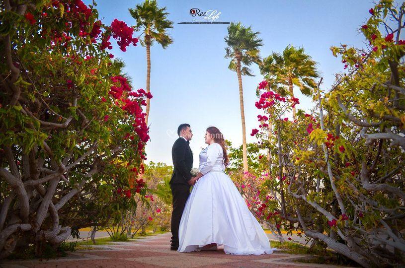 Flores y palmeras