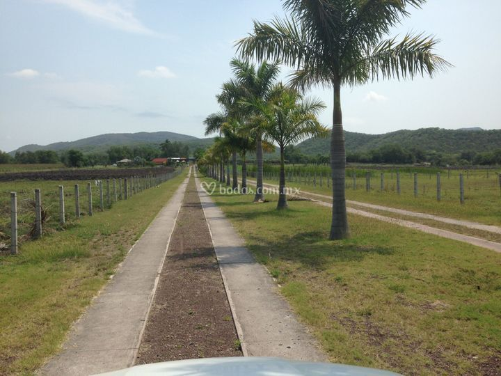 Camino de la entrada