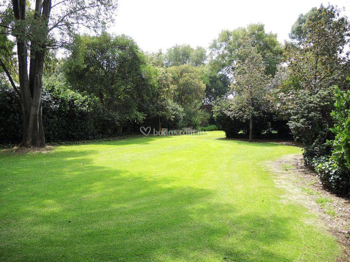 Jardín del álamo plateado