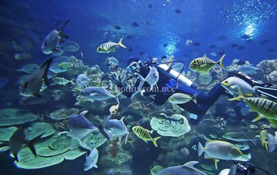 Naturaleza acuática