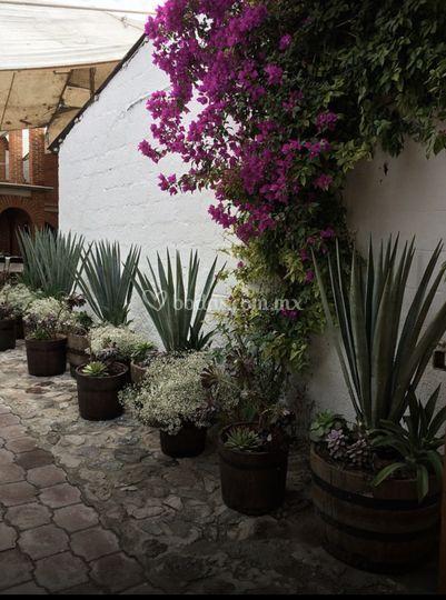 Entrada rústica con plantas
