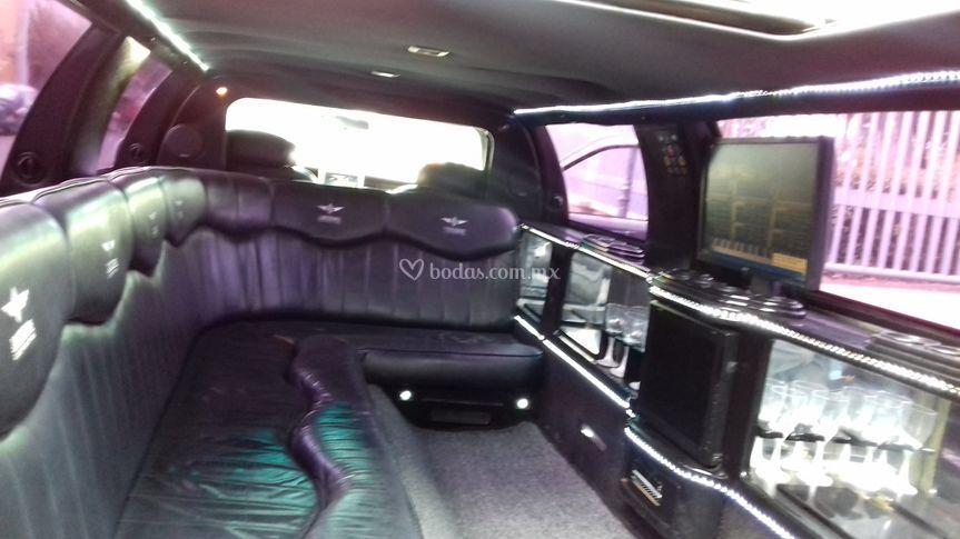 Limousin Lincoln blanca