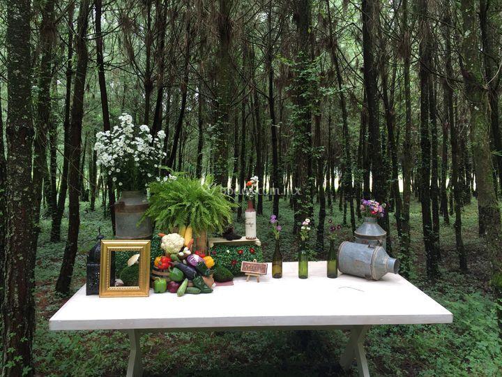 Bosque para bodas