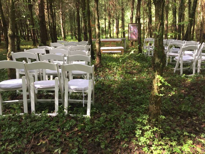 Boda civil en el bosque