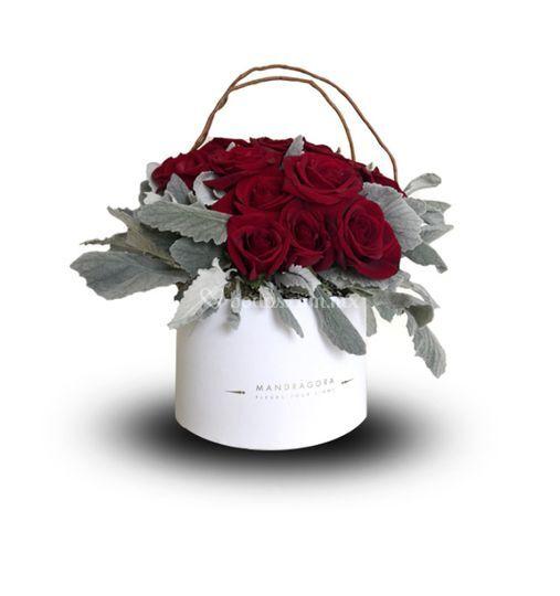 Rosas tradicionales y follaje