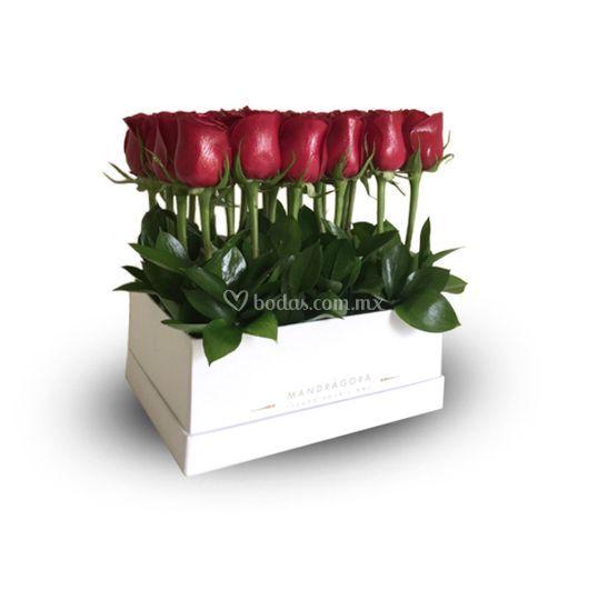 White box con rosas