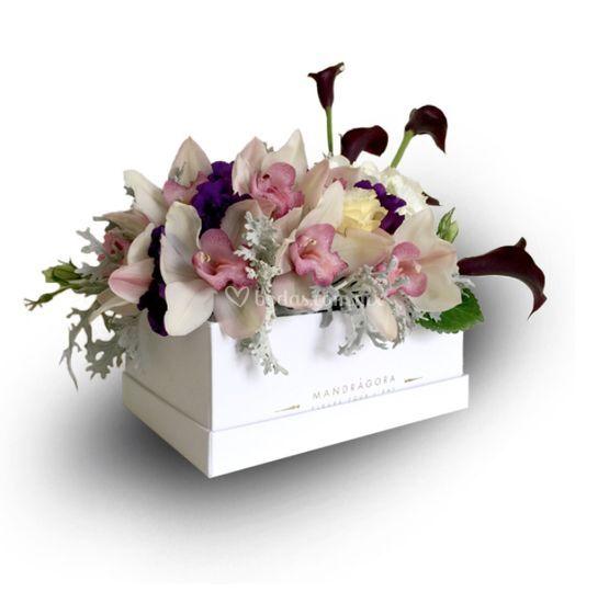 Caja blanda de orquídeas