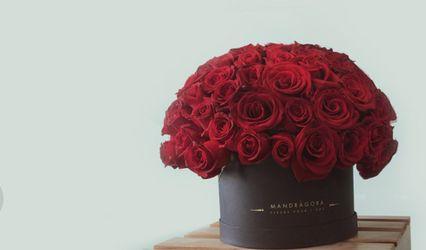Mandragora Fleur 1