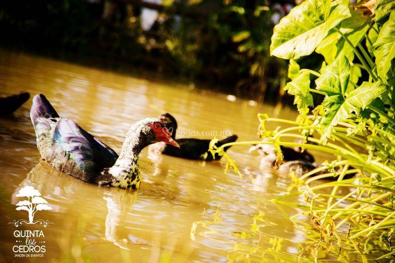 Fauna en lago