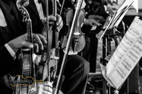 Violines Amadeus Classic