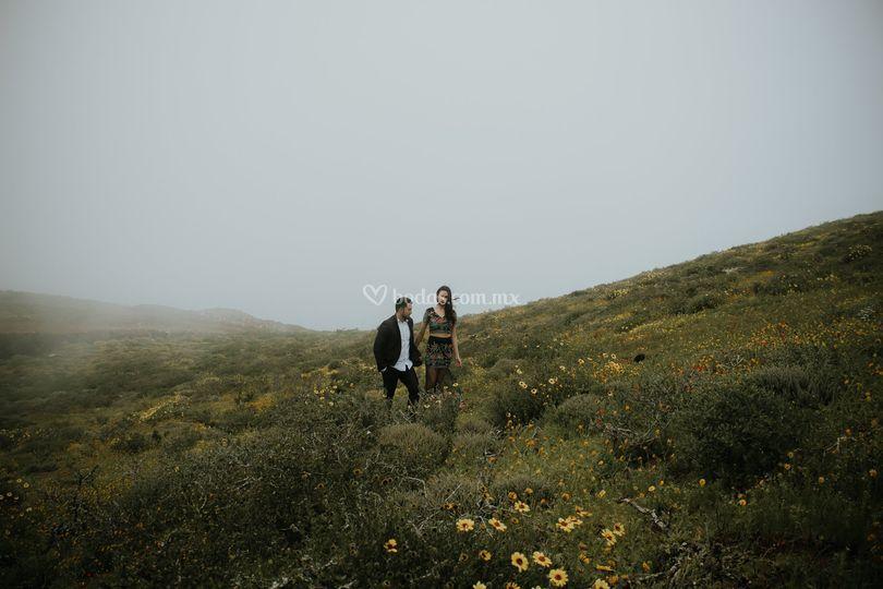 En la niebla. Baja california