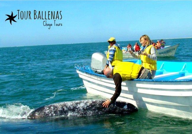 Tour Ballena Gris