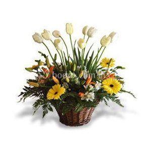 Preciosos tulipanes