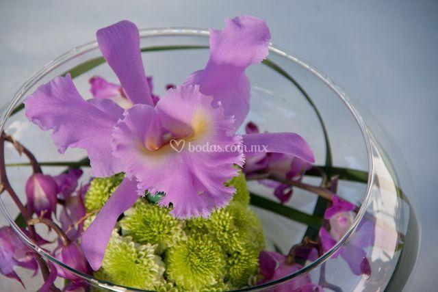 Centro de mesa orquidea de Magnolia Floristería