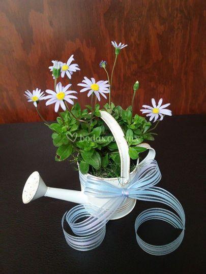 Arreglo de flores vivas