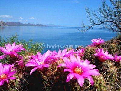 Vista al mar de Cortéz