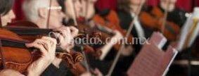 Agrupación de violines