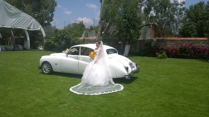 Jaguar 1952a