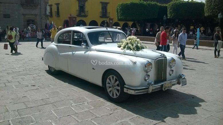 Jaguar 1952b