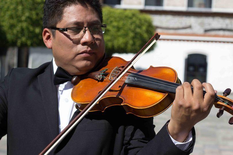 Violines puebla