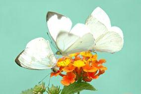 Mariposas al Aire