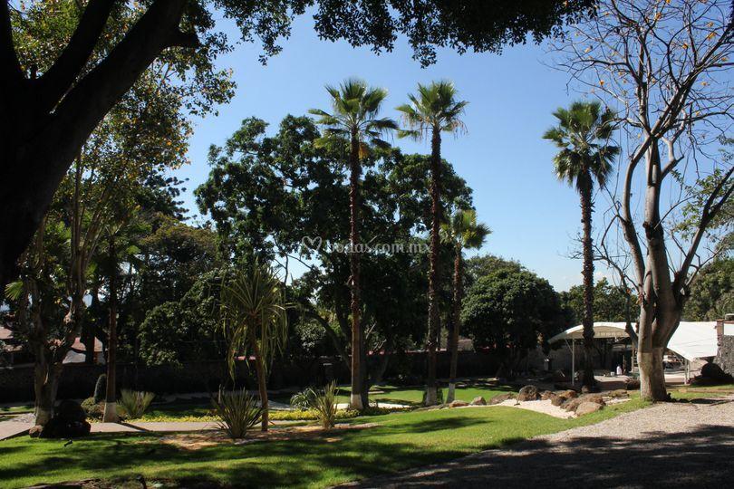Jard n macadamia Jardin villa trisara cuernavaca