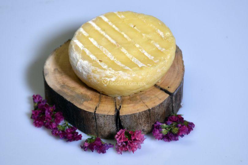 Delicioso queso maduro Paolo