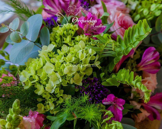 Orquídea eventos