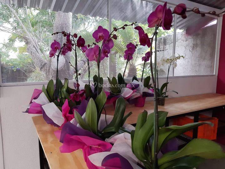 Centros de mesa en planta