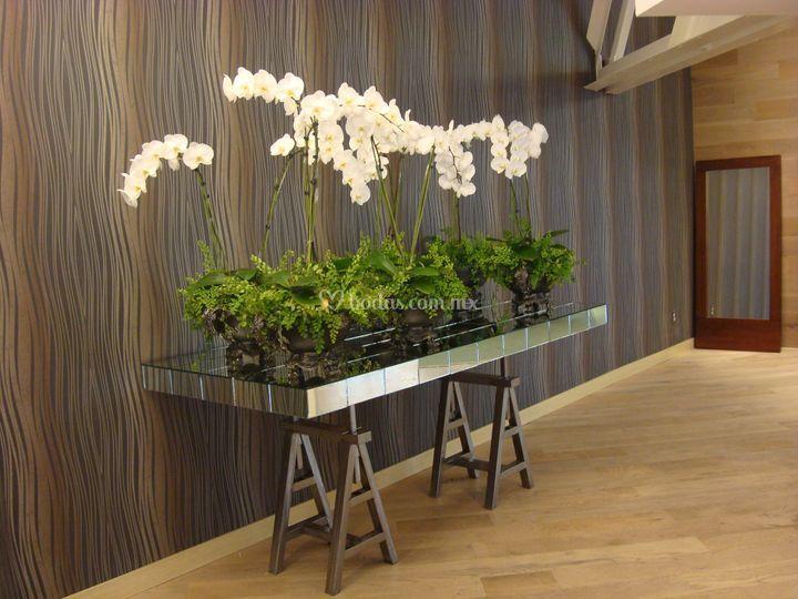 Orquídeas espectaculares