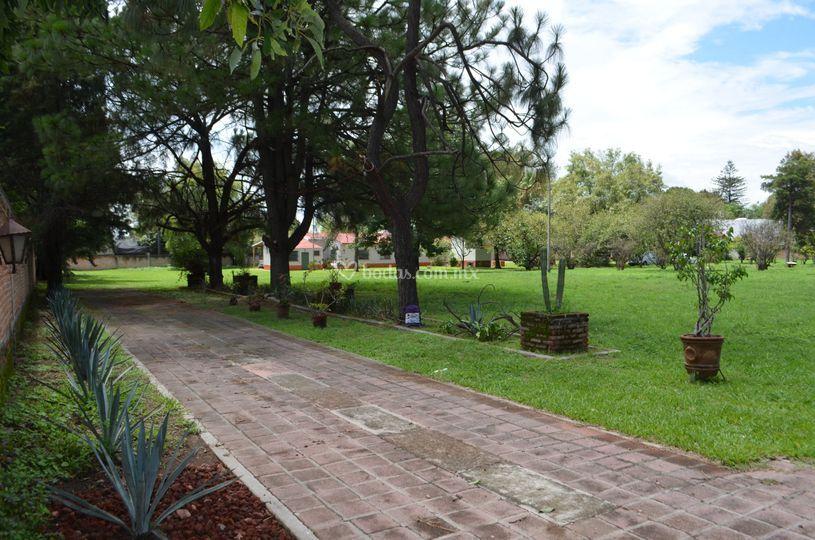 Terraza los pinos for Pinos para jardin