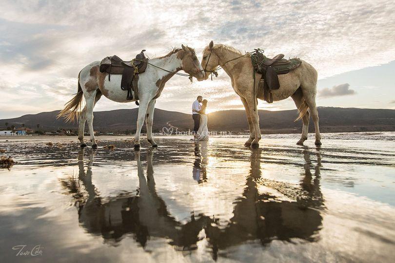 Sesiones con caballos