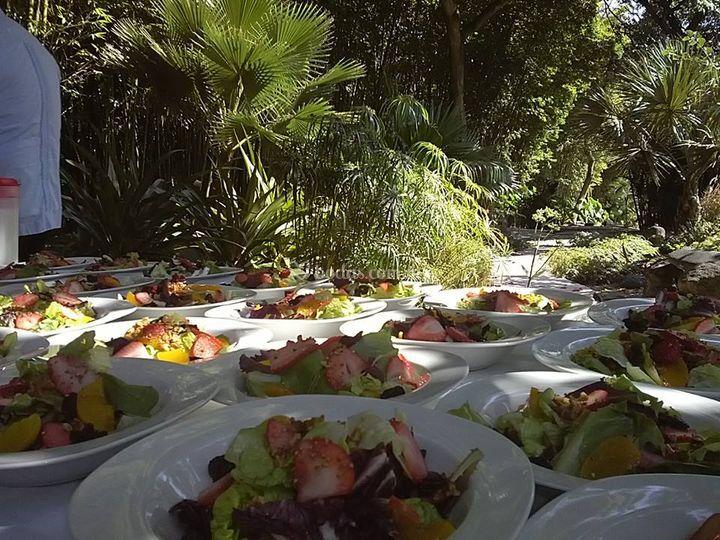 Fresh Salate