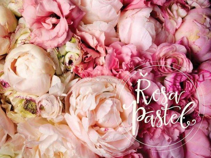 Rosa Pastel Eventos
