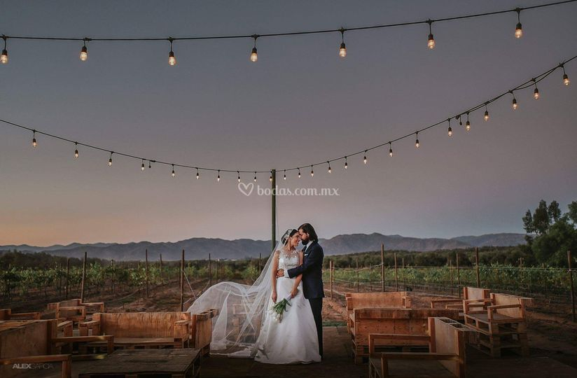 Almazara Rancho Olivares