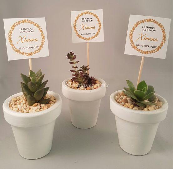 Vinde plantas y artesan as - Plantas pequenas para regalar boda ...