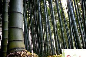 Bamboo Salón Jardín