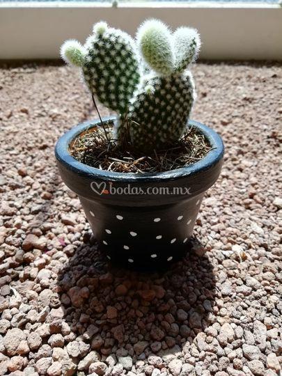 ¿Cactus o suculenta?