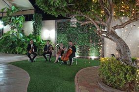White Strings Cuarteto