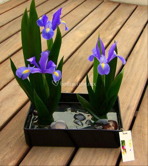 Centros de mesa con iris