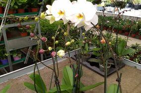 Orquídeas Biker