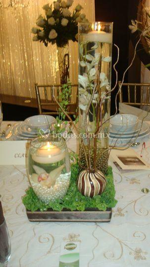 Fiesta de orquídeas