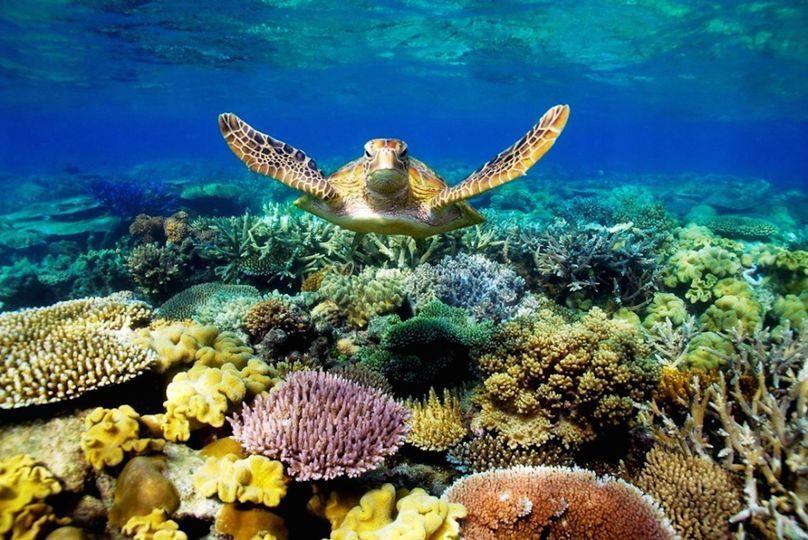 Bucea en Australia
